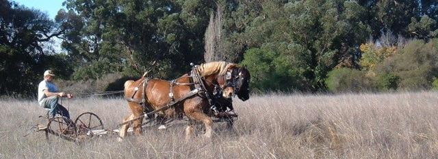 e5dc0-horses